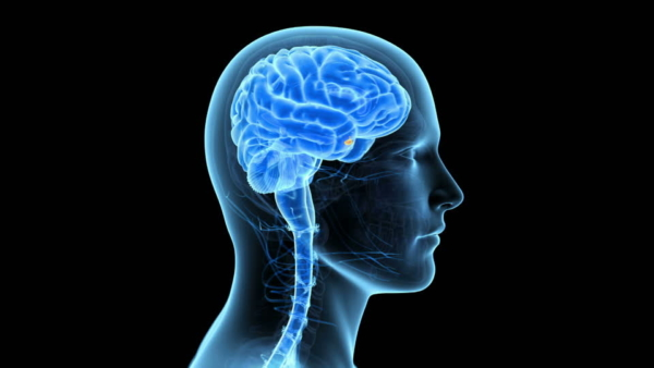 Massage Therapy CEU Courses Online Brain Disorders Course